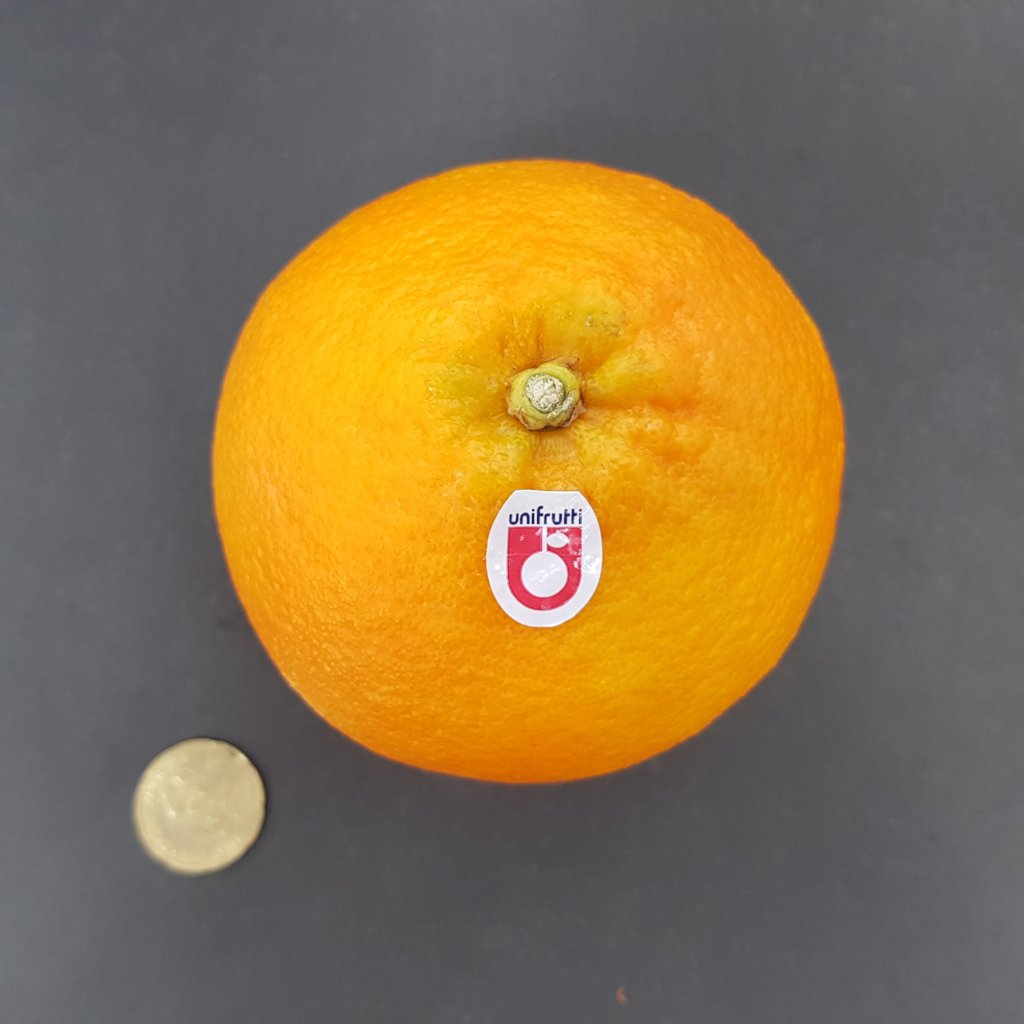 Unifrutti Large Navel Oranges