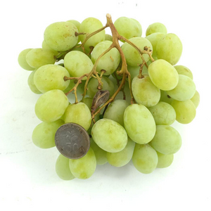 South African Sweet Globe Green Seedless Grapes