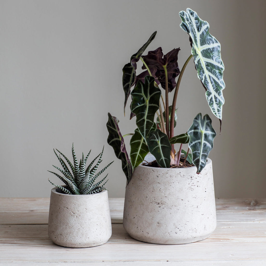 Stratton Tapered Plant Pots - Cement