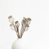 Tiny Treasures - Poppy Seedhead Bunch
