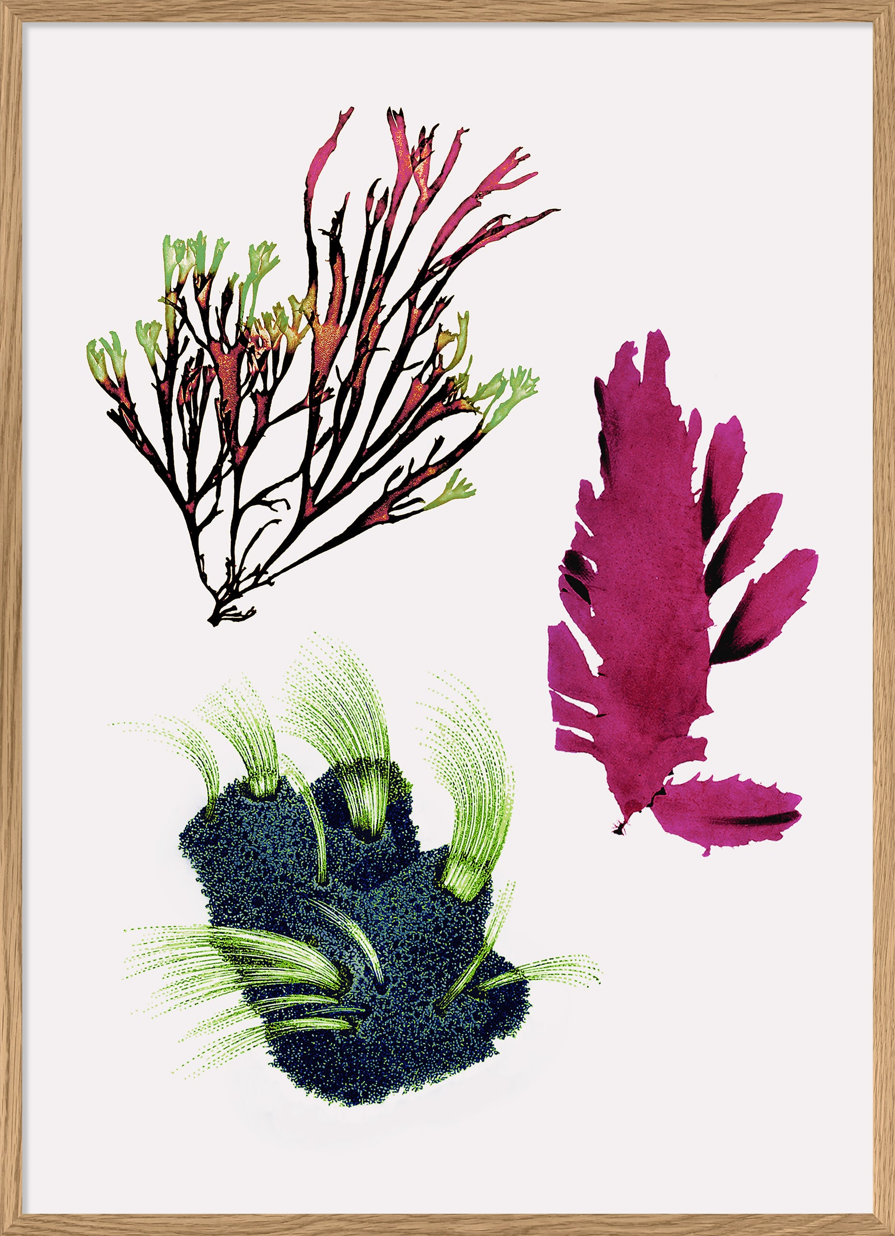 THE DYBDAHL CO | Seaweed #2203 | 30cm x 40cm