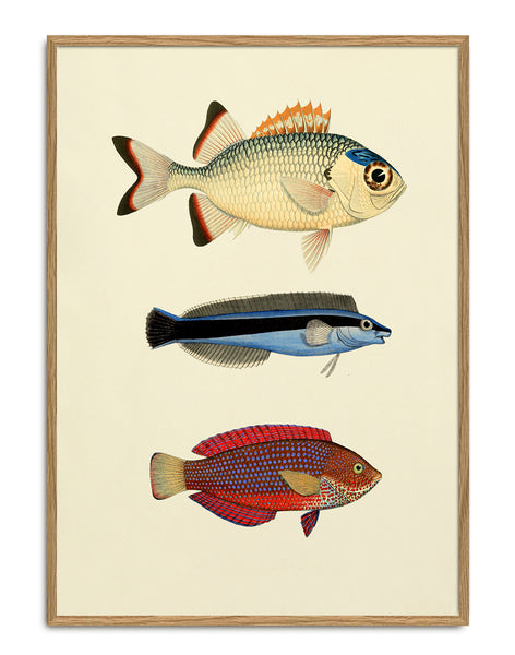 THE DYBDAHL CO | The Fishes #3906 | Canvas | 70x100cm