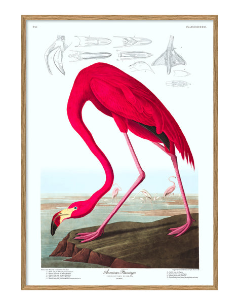 THE DYBDAHL CO | American Flamingo #6500 | Canvas | 70x100cm