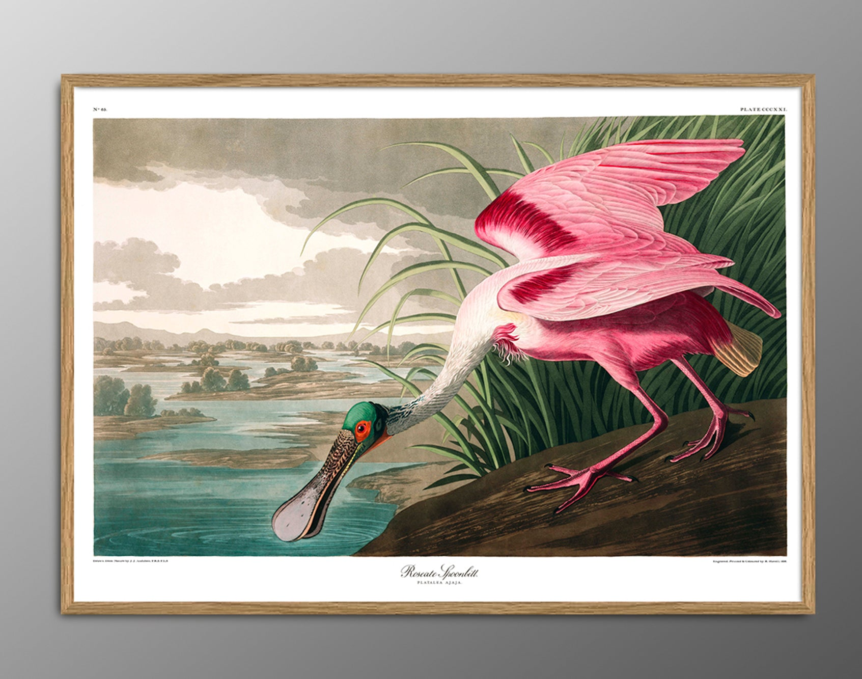 THE DYBDAHL CO | Roseate Spoonbill #6506 | 30cm x 40cm
