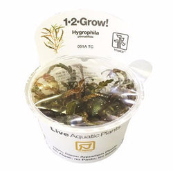 Tropica 1-2 Grow- Hygrophila pinnatifida-1-2 Grow-The PlantGuy