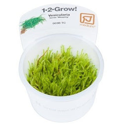 Tropica 1-2-GROW- Weeping moss Vesicularia ferriei-1-2 Grow-The PlantGuy