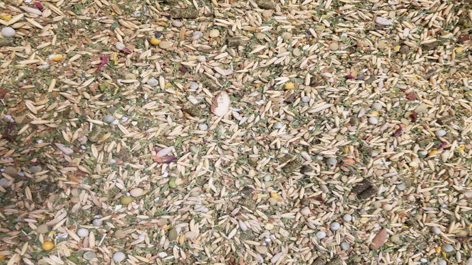 Organic Feed for Poultry