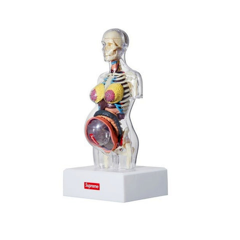 SUPREME FEMALE ANATOMY MODEL -WHITE
