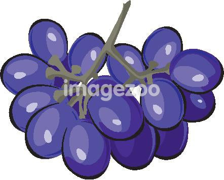 Drawing of a bunch of purple grapes