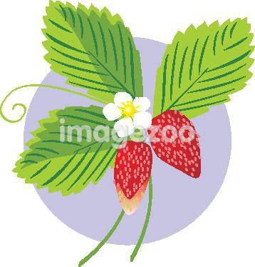 Drawing of freshly picked strawberries