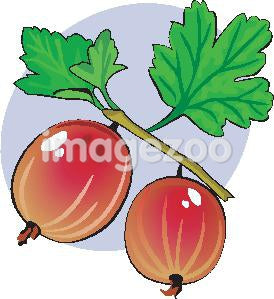 A drawing of gooseberries