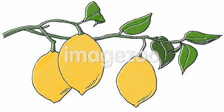 Lemons on a vine