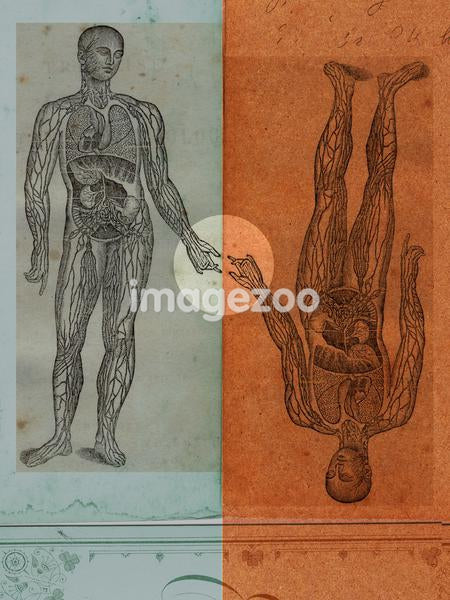 Medical illustrations of a man's body showing circulatory system and internal organs