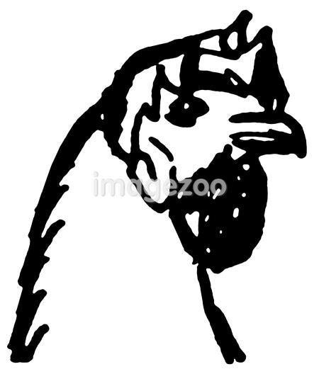 A black and white version of a close up illustration of a hens head