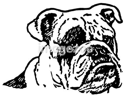 A black and white version of an unhappy looking Bulldog