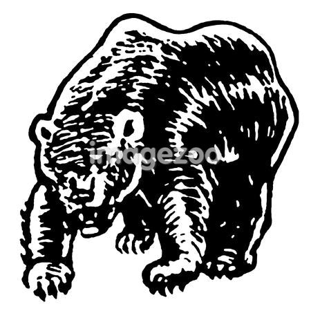A black and white version of an illustration of a fierce looking bear