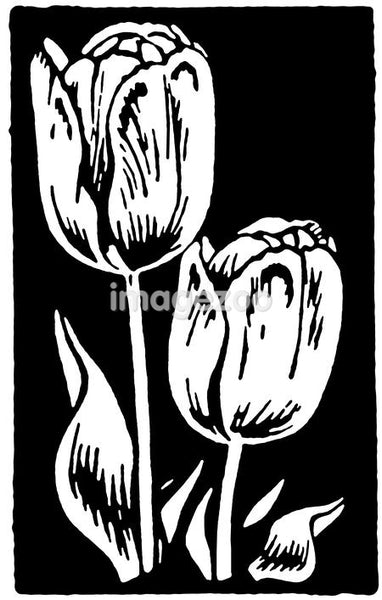 A black and white version of a vintage print of Tulips