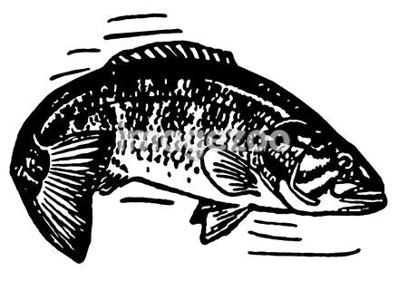 A black and white version of an illustration of a fish