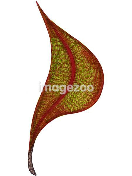 A hand drawn illustration of an autumn leaf