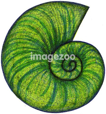 A hand drawn illustration of a green shell
