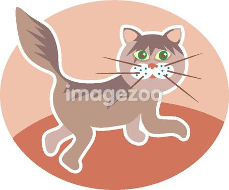 Illustration of a kitty cat