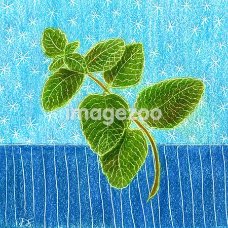 An illustration of green mint leaves