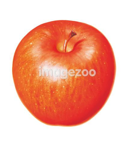 An illustration of an apple