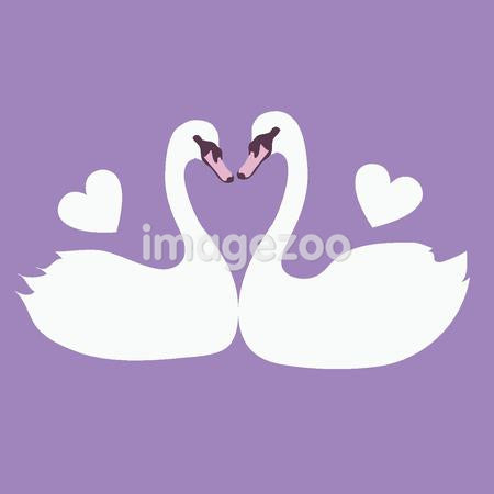 Two swans with their beaks touching to form a heart