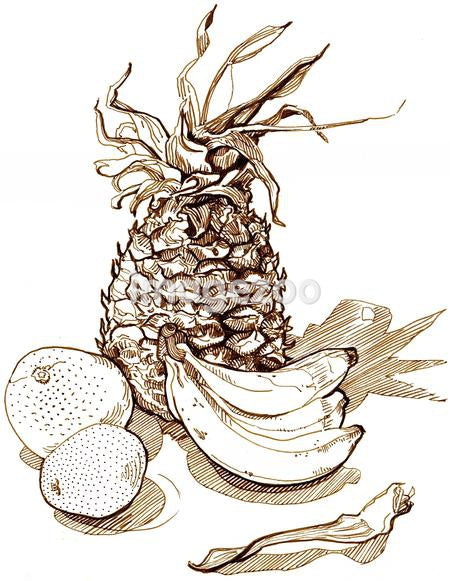 An illustration of fruit against white background