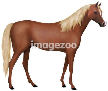 A picture of a chestnut horse