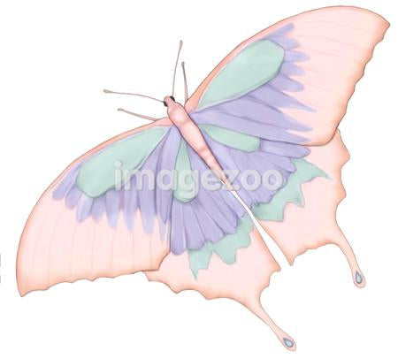 An illustration of a beautiful butterfly