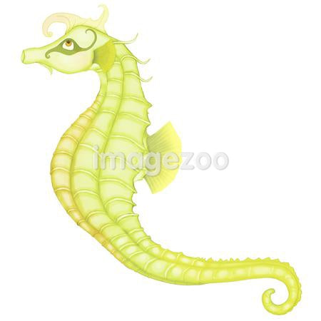 Seahorse against white background