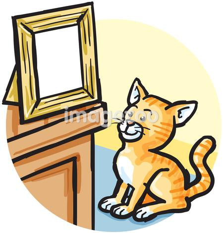 A cat looking at a picture frame