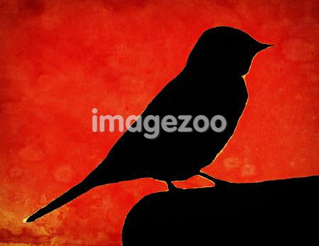 A silhouette of a bird