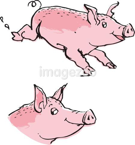 Pigs against white background