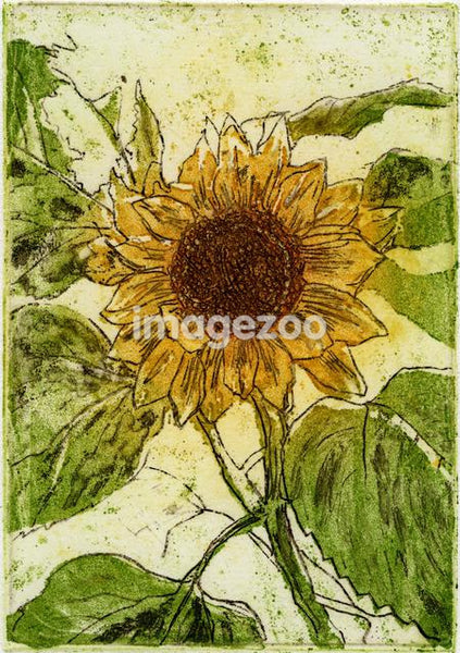 Drawing of a sunflower