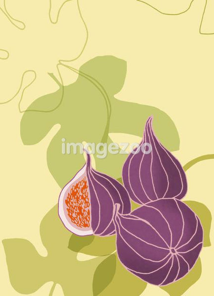 An illustration of figs