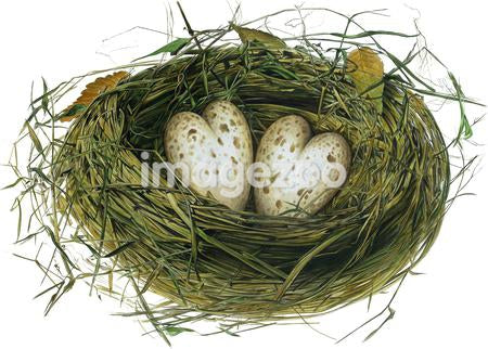 Two heart shaped eggs in nest