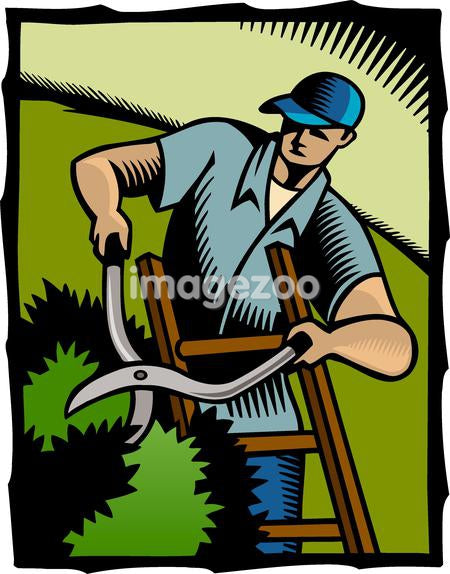 A man cutting hedges