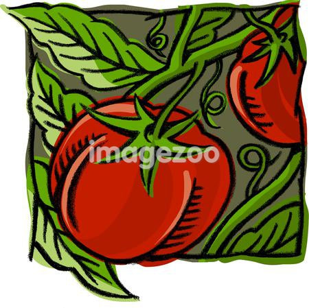 A picture of tomatoes on the vine