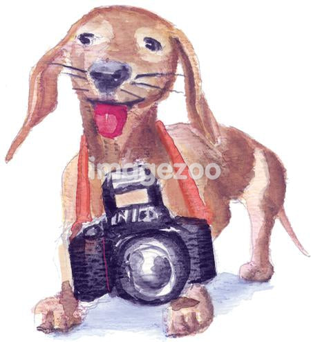 A watercolor painting of a small brown dog with a large camera hanging around his neck