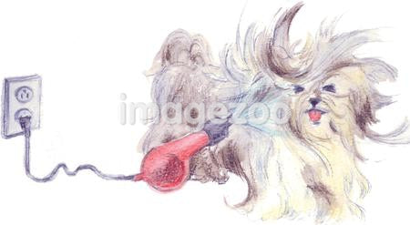A watercolor painting of a small long haired dog having a blow dry
