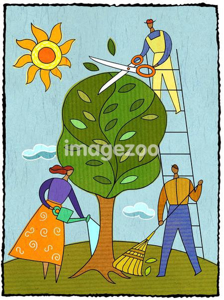 Three people caring for a tree