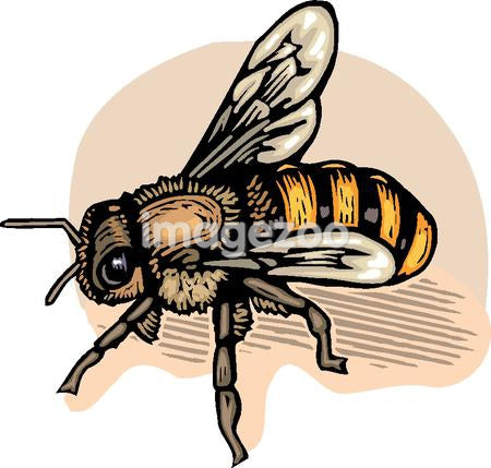 Cartoon drawing of a bee
