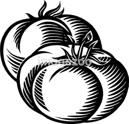 A drawing of two plump tomatoes in black and white