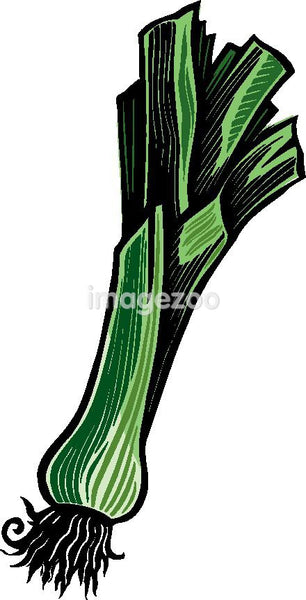 A pictorial representation of a bunch of leek