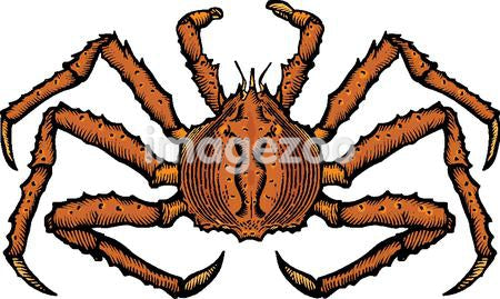 A drawing of a king crab