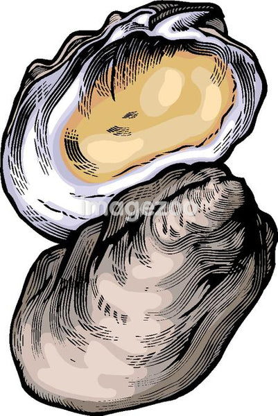 A drawing  of an oyster
