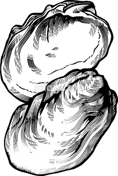 A black and white drawing  of an oyster
