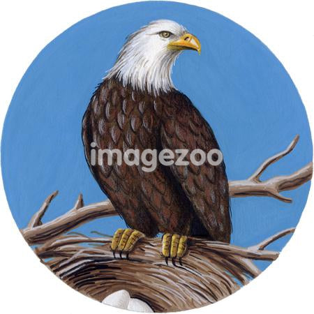 An illustration of an eagle standing on the edge of a nest